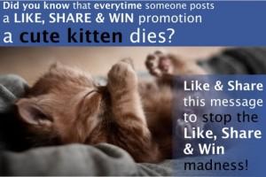Sleepy-Kitten-Belly-Up-2-595x397